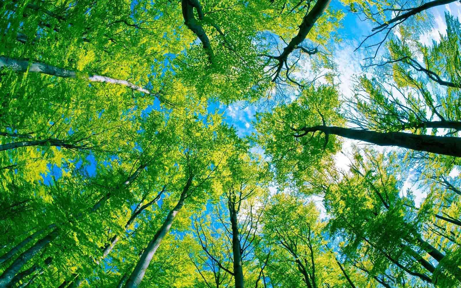 arbre-cime.jpg